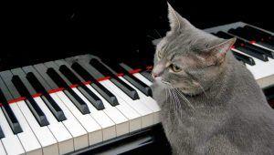 pratique musicale