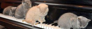 animaux et musique